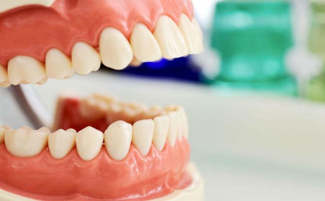 Noms et disposition des dents chez l'adulte et l'enfant